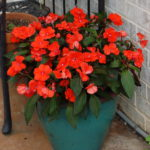 Beuatiful red spring flowers