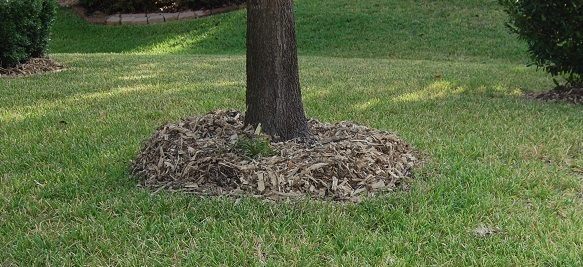 Fully mulched tree