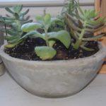 finished concrete pot
