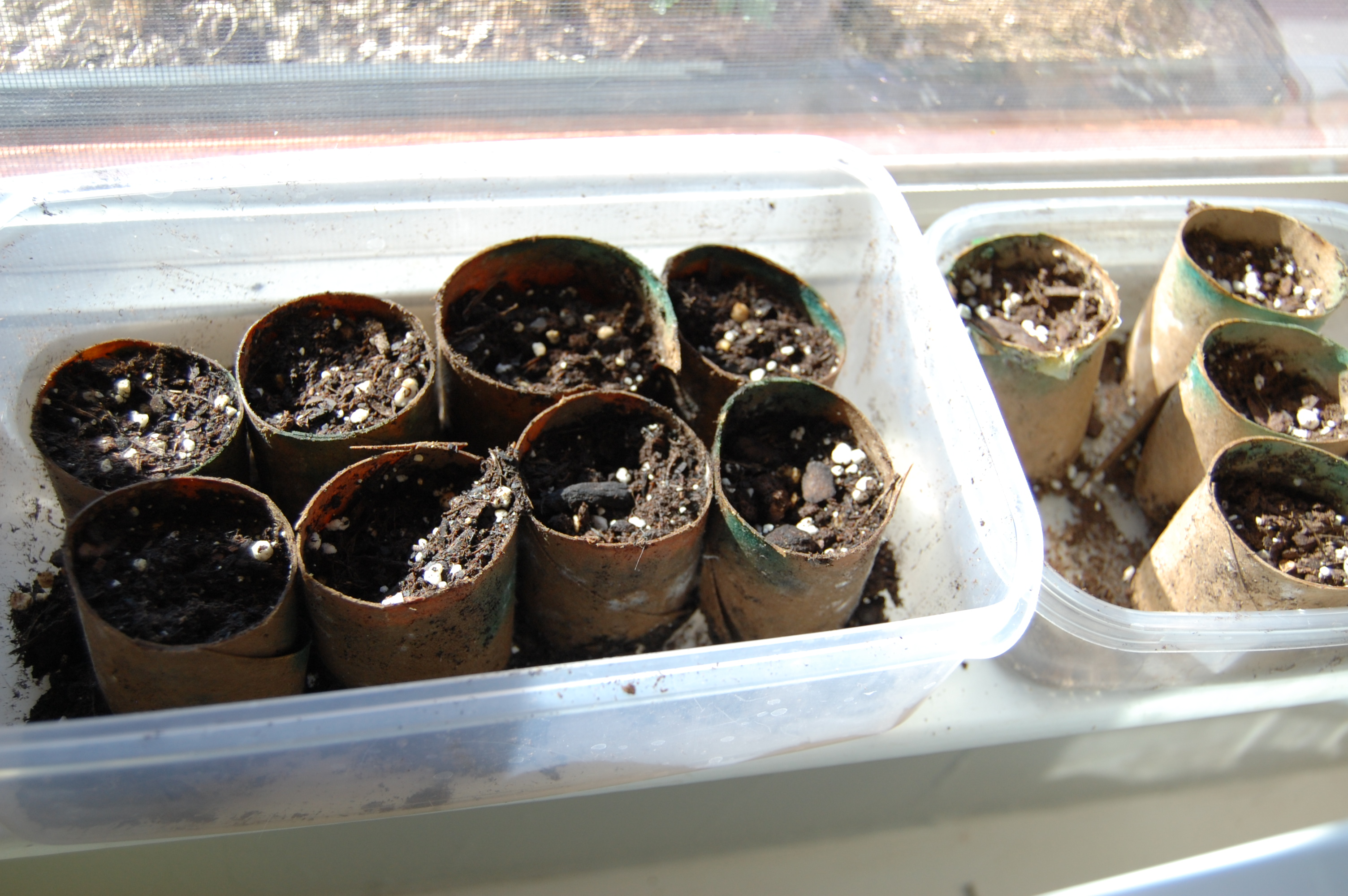 Seed trays made from TP rolls