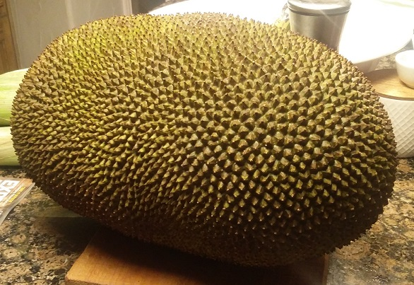 Looking for a culinary adventure?  try a Jackfruit
